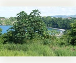 BEAUTIFUL Investment Beachfront 4.2 acre Property in St. Mary, JAMAICA!